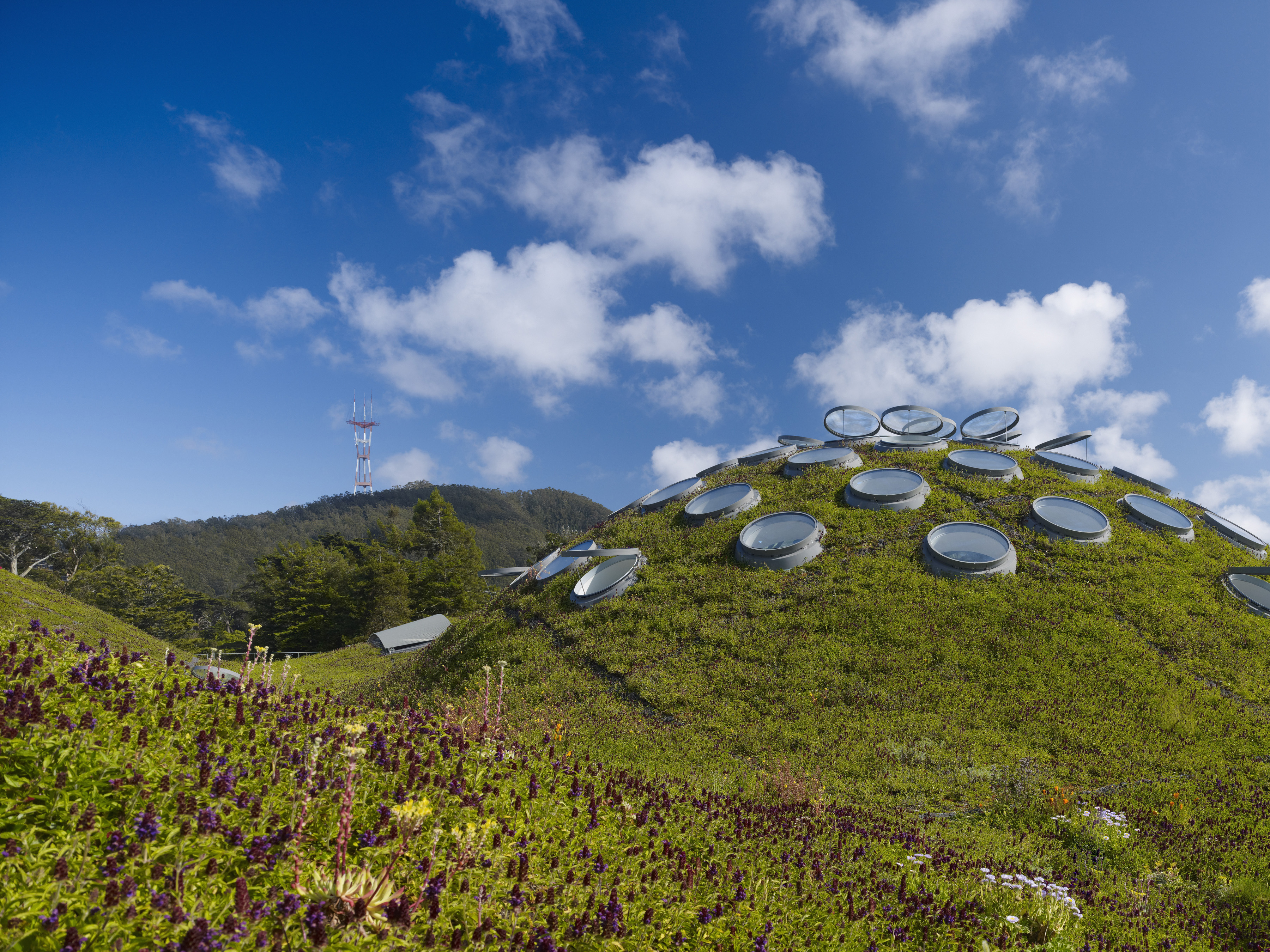 Living roof tim griffith